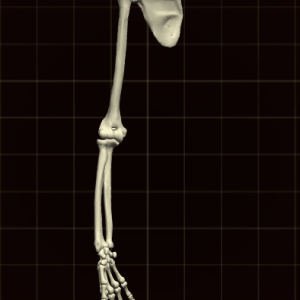 骨を繋げてコントロール!
