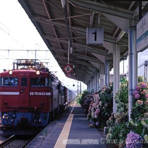 白石駅~紫陽花の咲く頃
