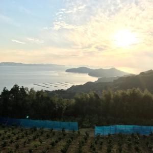 みかん山からの景色