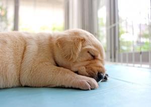 アスペルガー受動型の嫁は寝ているのに睡眠不足!自閉症スペクトラムの人は睡眠障害が多い?眠れるコツは?
