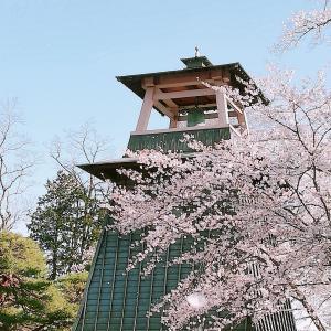 鐘楼と桜吹雪