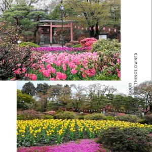 沼田公園は桜が終わり、チューリップと芝桜が見ごろでした。もうすぐツツジが満開です。