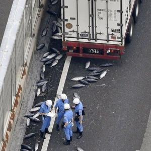 カツオ5トン大散乱散らかしまくりの阪和道