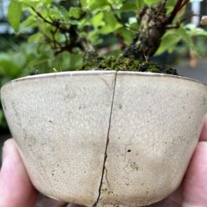 台風一過の植え替えの巻