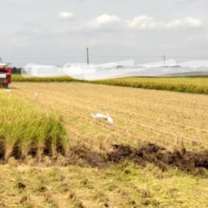 地味に疲れた籾殻の袋詰め ~田んぼの排水設備を作る~