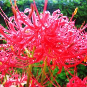 一雨ごとに深まる秋