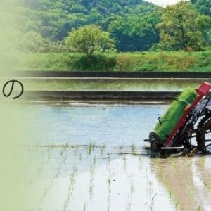 密苗栽培を失敗させない為のポイントを解説!