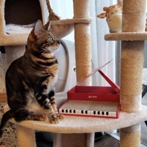 【本】「くよくよしない力」を読んでフジコ・ヘミングのピアノを聴いてみた