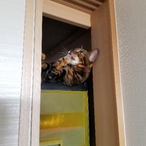 猫が死んだふりをしています。