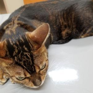 猫の胃腸炎に気を付けましょう