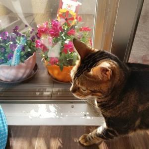 猫と花を愛でつつステイホームな連休