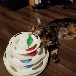 猫バカは出会ってしまう。