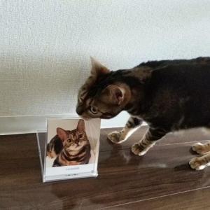 「ねこのきもち」で「うちの猫グッズ」いただき!
