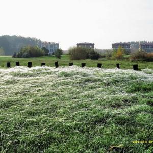 芝生を覆う膜状の光るものは何?