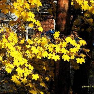 陽光が差すと金色に輝く窓の眺めww