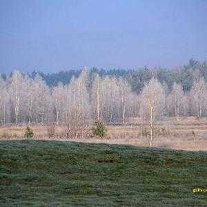 霧が晴れて見えたのは樹氷の白樺林