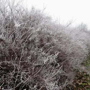 寒い霧と樹氷の朝~久し振りの零下