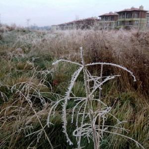 寒くないのに無風で霜がびっしり