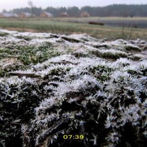 久し振りの凍った朝~無風で零下4度