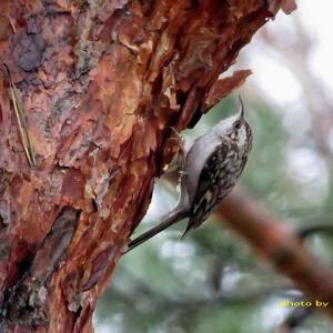 松の伐採後は森の野鳥が来ていない