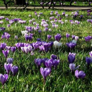 次々に咲く花達~まだ早春の花だが