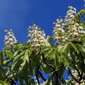 5月は花の季節~ワジェンキ公園も