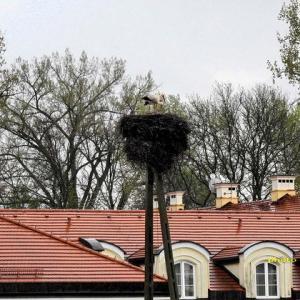 ホテルにコウノトリが営巣するかも…