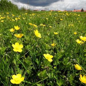 新たな野の花が次々に~やはり5月