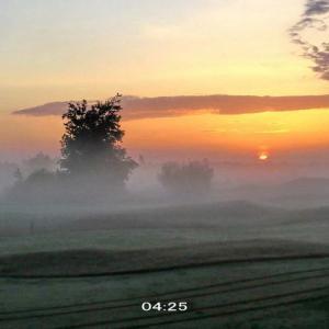 幻想的な霧の朝に怪しい獣影を見た