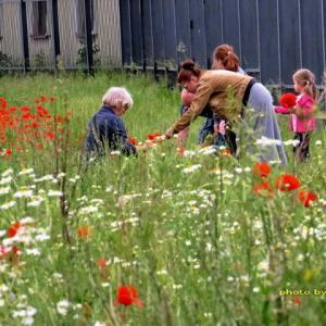 野の花を摘む人々~村の道路脇でww