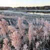 初樹氷~雑草もとても綺麗に見えた