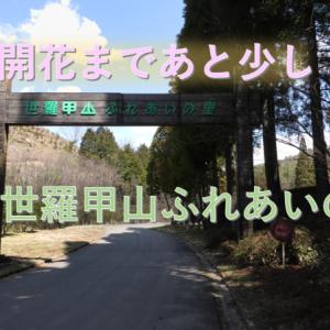 【広島しだれ桜スポット】桜の開花まであと少し世羅甲山ふれあいの里