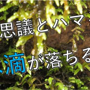 【癒しの自然音】水滴の滴る音