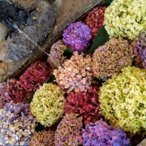 別小江神社 紫陽花で埋め尽くされた手水舎と人気の御朱印