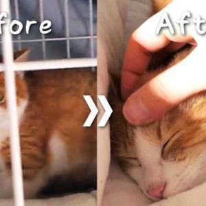 【動画】保護した子猫をナデられるまで1ヶ月まとめ