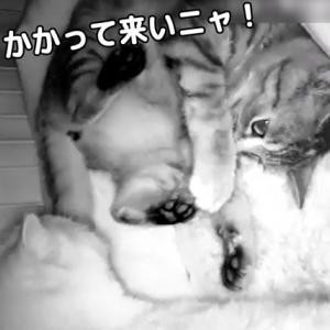 【動画】子猫たちが夜中にケージの中で大バトル!!