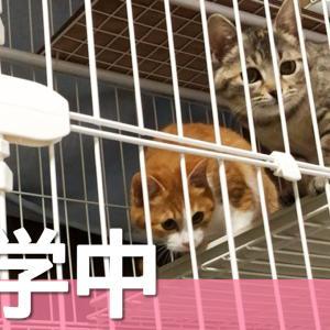 【動画】ケージの掃除を見守る子猫たち