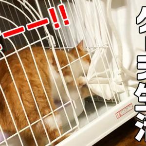 【動画】体調が落ち着くまでケージに逆戻りになった子猫