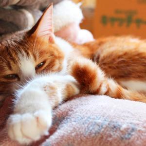 我が家の猫の最高のショットを撮りたい【カメラ初心者】