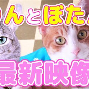 【動画】りんとぼたんの日常通信Vol.2