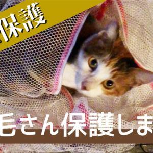 【新しい保護猫】地域猫の三毛さんを保護しました