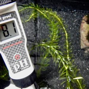 屋外メダカ主要水槽のpH測ってみた!