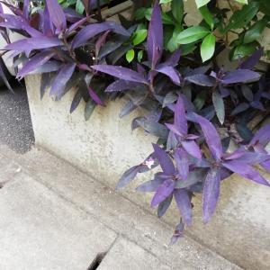 紫御殿がやって来た!そしてメルカリでの販売状況はいかに?