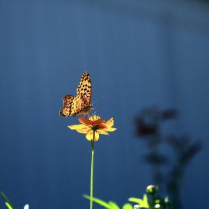 【 花と蝶 】