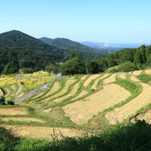 【 棚田の稲刈り風景 】