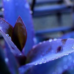 【 雨上がりの朝<その1>】