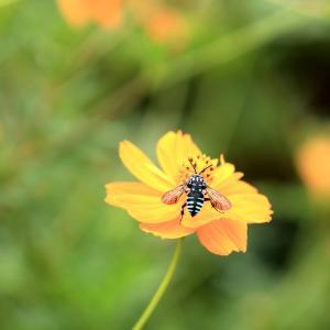 【 青い蜂をもう一度 】