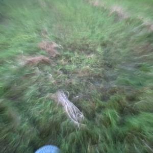 草刈りとそばかす