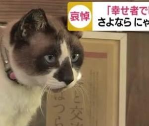 鹿児島・嘉例川駅の人気猫「にゃん太郎」天国へ