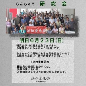 浜松 愛魚会研究会 明日 6月23日